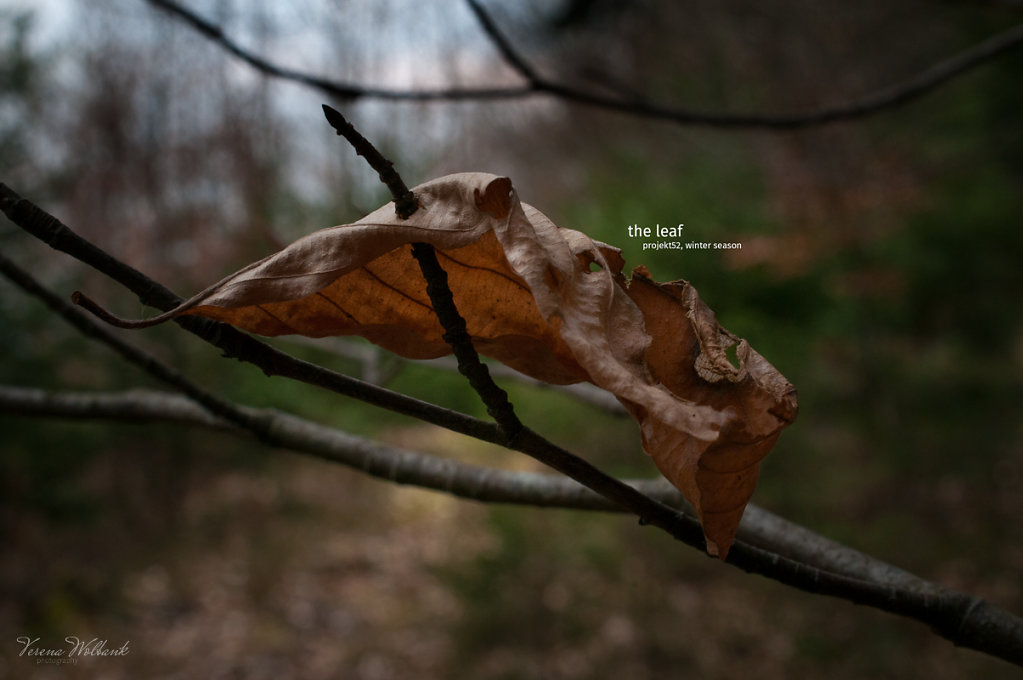 12/52 - the leaf, winter season